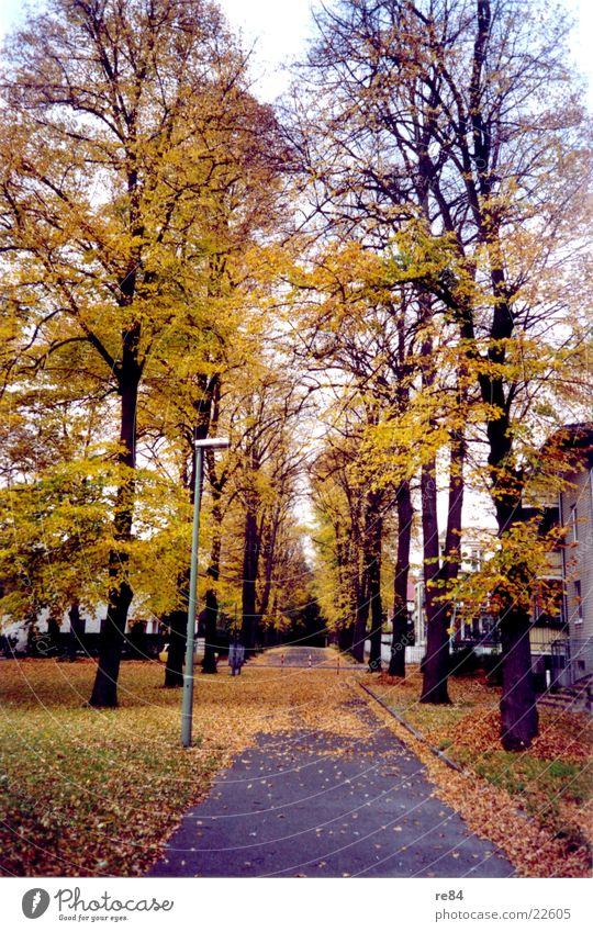 Herbststraßen Blatt gelb Straße kalt braun Ast Allee