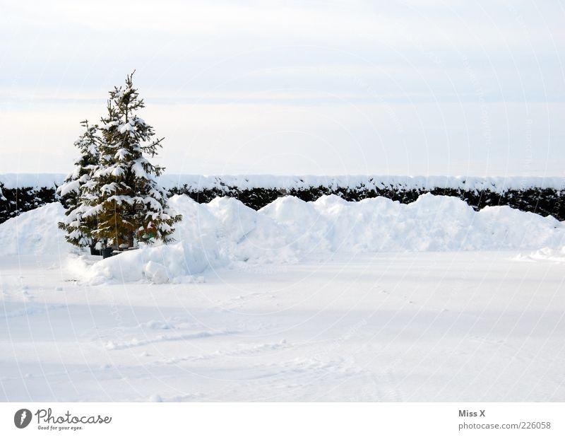 OH BÄUMEBAUM OH BÄUMEBAUM Winter Eis Frost Schnee Baum Garten kalt Einsamkeit Tanne Weihnachtsbaum Farbfoto Außenaufnahme Menschenleer Textfreiraum oben