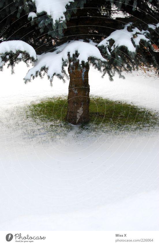 Kleines Fleckchen Grün Winter Schnee kalt grün weiß Tanne Weihnachtsbaum Baumstamm Fichte Rasen Wiese Gras Farbfoto Außenaufnahme Menschenleer