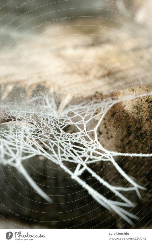 Eisige Zeiten Umwelt Natur Winter Klima Frost Baum Garten Park kalt braun weiß gefroren Spinnennetz Baumstamm Baumstumpf Einsamkeit Nahrungssuche