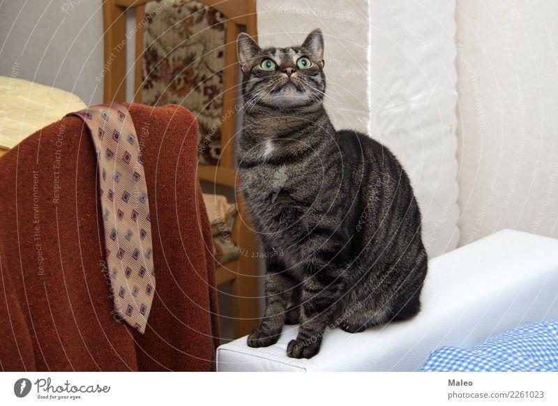 Katze mit grünen Augen schön Haus Tier klein Glück Häusliches Leben Kopf sitzen Stuhl Körperhaltung Haustier Fell Körperpflege
