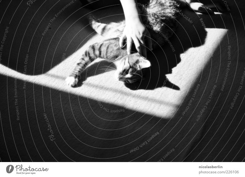Lazy Sunday Hand Freude Tier Erholung Glück Katze Freundschaft Zufriedenheit Vertrauen Lebensfreude Fell niedlich genießen Pfote Haustier kuschlig