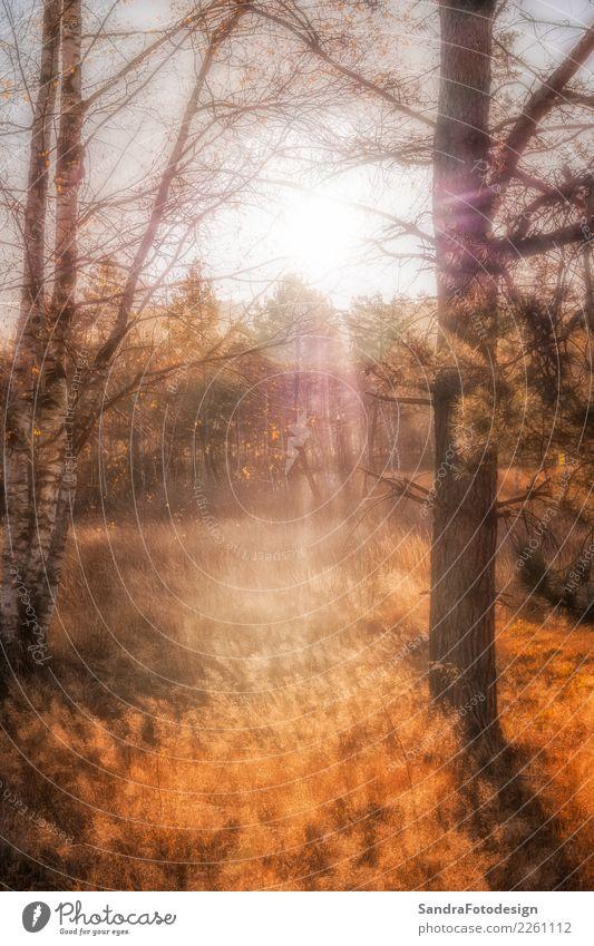 Autumn landscape, Moorpark in Arrach in Bavaria Natur Pflanze Farbe Landschaft Sonne Erholung ruhig Wald Wärme gelb Umwelt Herbst Gefühle Tourismus orange