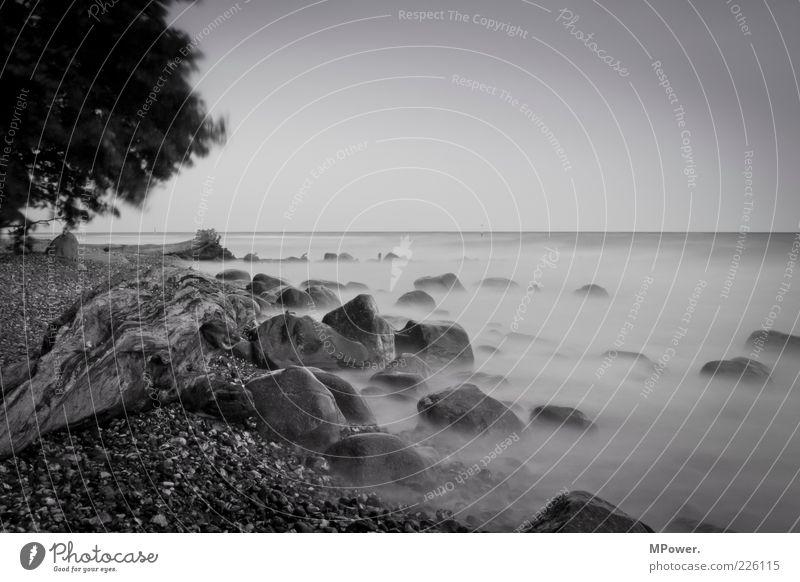 Ostküste Natur Baum Meer Strand Ferien & Urlaub & Reisen dunkel Stein Landschaft Küste Nebel geheimnisvoll außergewöhnlich Baumstamm Ostsee