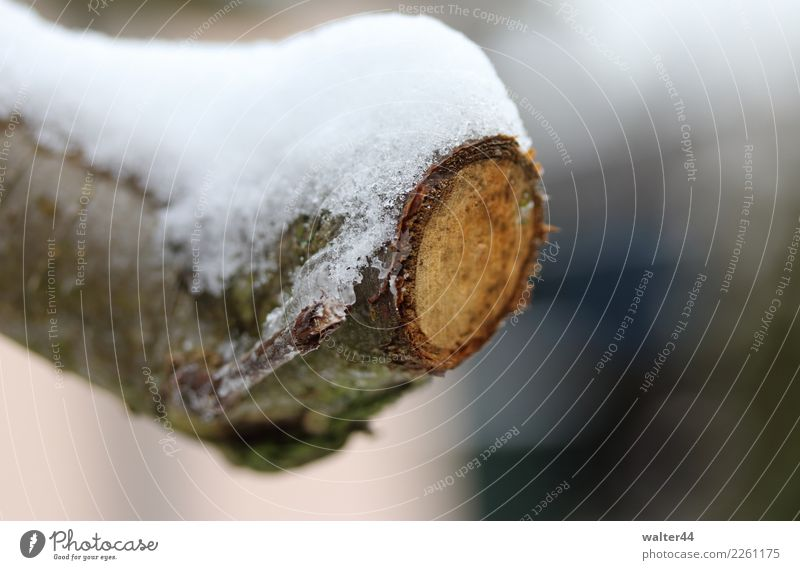 Abgeschnitten Umwelt Natur Pflanze Winter Eis Frost Schnee Baum Garten kalt Apfelbaum Farbfoto Außenaufnahme Tag Schwache Tiefenschärfe Zentralperspektive
