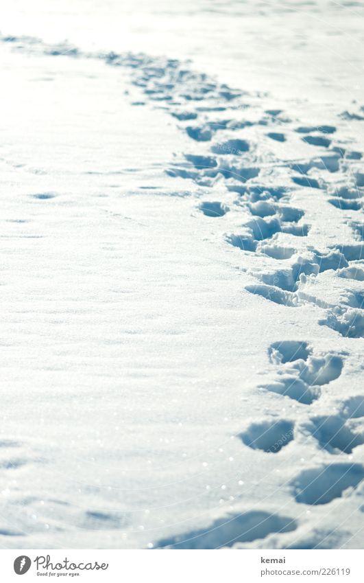 Viele Spuren Umwelt Natur Sonnenlicht Winter Schönes Wetter Eis Frost Schnee hell kalt viele weiß Fußspur Tiefschnee Farbfoto Gedeckte Farben Außenaufnahme