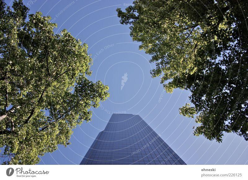 Columbia Tower grün blau Baum Blatt Haus Architektur Luft Fassade hoch Hochhaus Bauwerk Schönes Wetter Wolkenloser Himmel himmelwärts Seattle