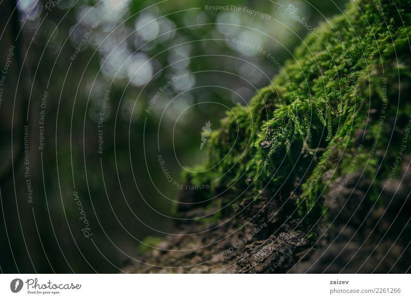Moos dicht auf einem alten Baum Natur Pflanze Frühling Sommer Herbst Winter Wald Urwald elegant natürlich grün Optimismus Tatkraft Farbfoto Außenaufnahme