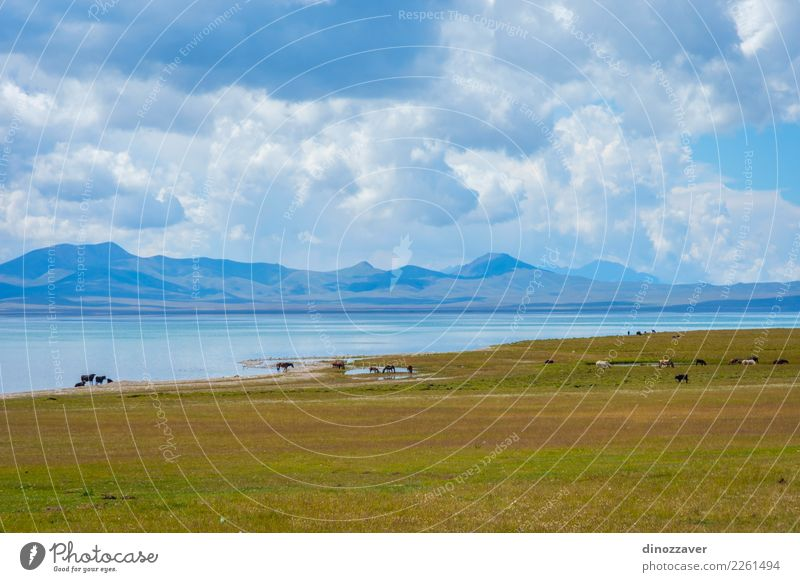 Pferde durch Song Kul See, Kirgisistan schön Ferien & Urlaub & Reisen Tourismus Sommer Berge u. Gebirge Natur Landschaft Himmel Wolken Nebel Gras Park Wiese
