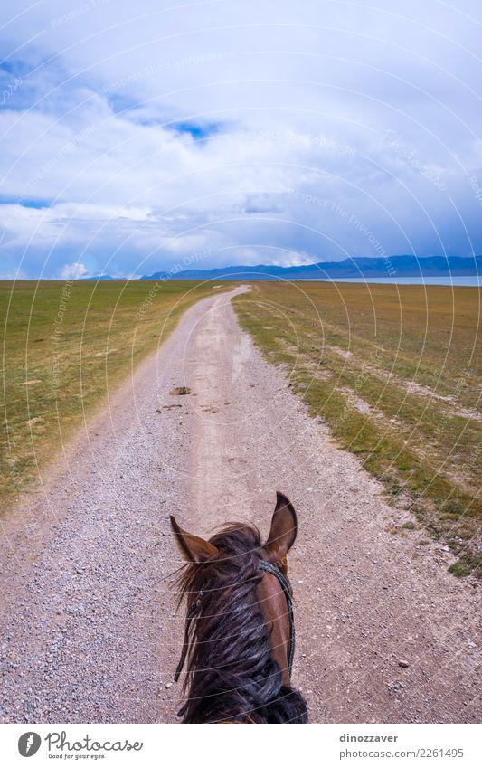 Vom Pferd zurück, Kirgisistan Natur Ferien & Urlaub & Reisen Sommer Landschaft Tier Berge u. Gebirge Lifestyle Wiese Wege & Pfade Sport Gras See braun