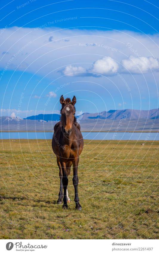 Pferd von Song Kul See schön Ferien & Urlaub & Reisen Tourismus Sommer Berge u. Gebirge Natur Landschaft Himmel Wolken Nebel Gras Park Wiese Hügel Felsen Herde