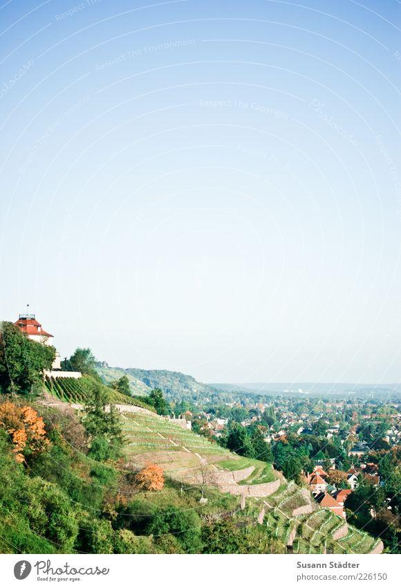 Weinberg Natur Wolkenloser Himmel Hügel Berge u. Gebirge Gipfel schön Weinbau Herbst Baum Radebeul Dresden Farbfoto Außenaufnahme Textfreiraum rechts