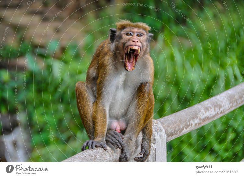 Schlechte Laune!!! Ferien & Urlaub & Reisen Tier Ferne Gesicht Tourismus Ausflug Körper Behaarung Wildtier sitzen Abenteuer Mund beobachten bedrohlich Zähne