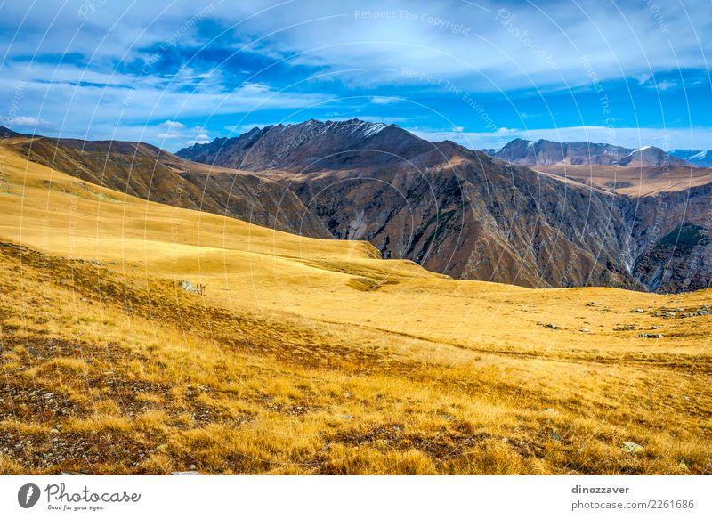 Goldene Berge in Nationalpark Lagodekhi, Georgia Natur Ferien & Urlaub & Reisen blau Sommer schön Landschaft Sonne Wolken Berge u. Gebirge Umwelt Herbst