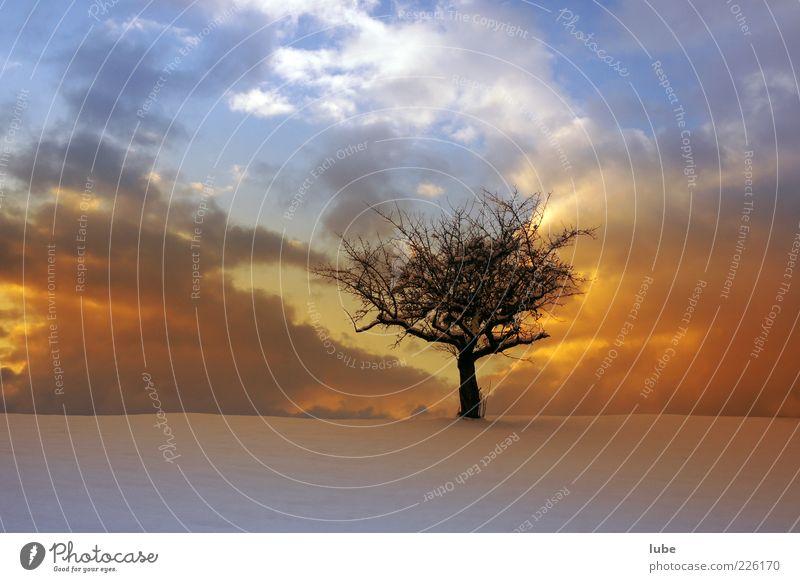 Singletree Himmel Natur Baum Ferien & Urlaub & Reisen Winter Einsamkeit Freiheit Umwelt Landschaft Gefühle Wetter Abenddämmerung Sonnenuntergang Sonnenaufgang
