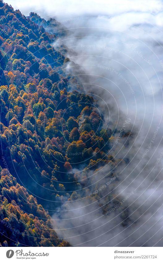 Herbstwald durch die Wolken von oben schön Sonne Berge u. Gebirge Umwelt Natur Landschaft Pflanze Nebel Baum Blatt Park Wald hell natürlich wild braun gelb grün