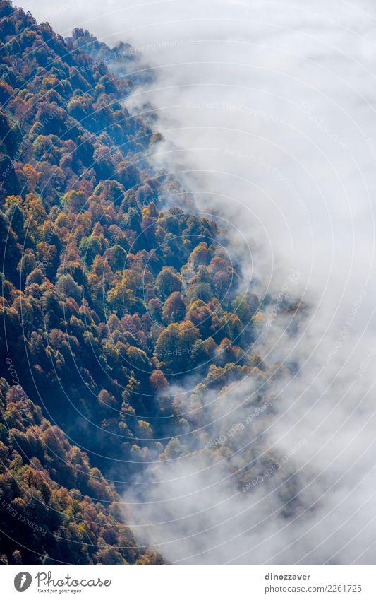 Herbstwald durch die Wolken von oben Natur Pflanze Farbe schön grün weiß Landschaft Sonne Baum rot Blatt Wald Berge u. Gebirge gelb Umwelt