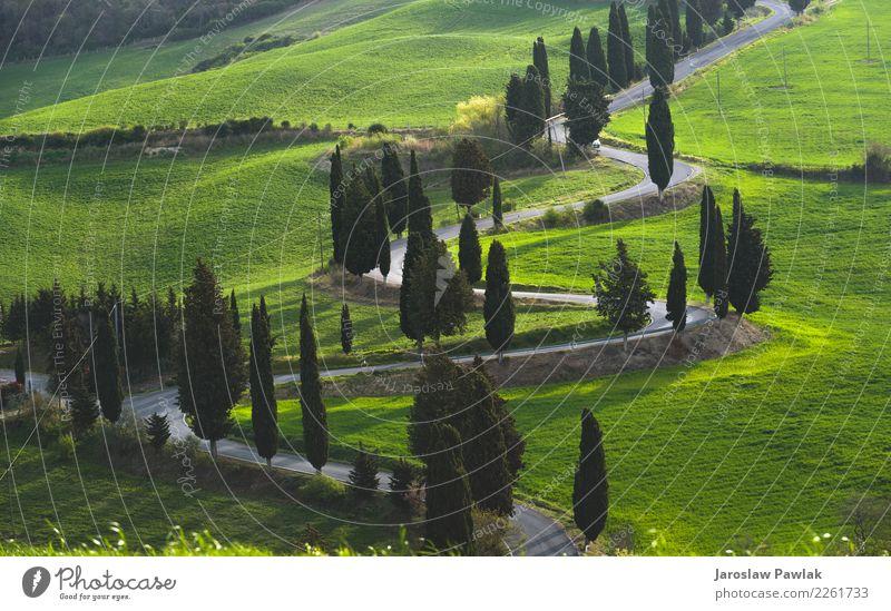 Landschaftsstraße in der Toskana Ferien & Urlaub & Reisen Sommer grün Baum Frühling Wiese Gefühle Stimmung Feld Abenteuer Italien Blitze Straßenrand