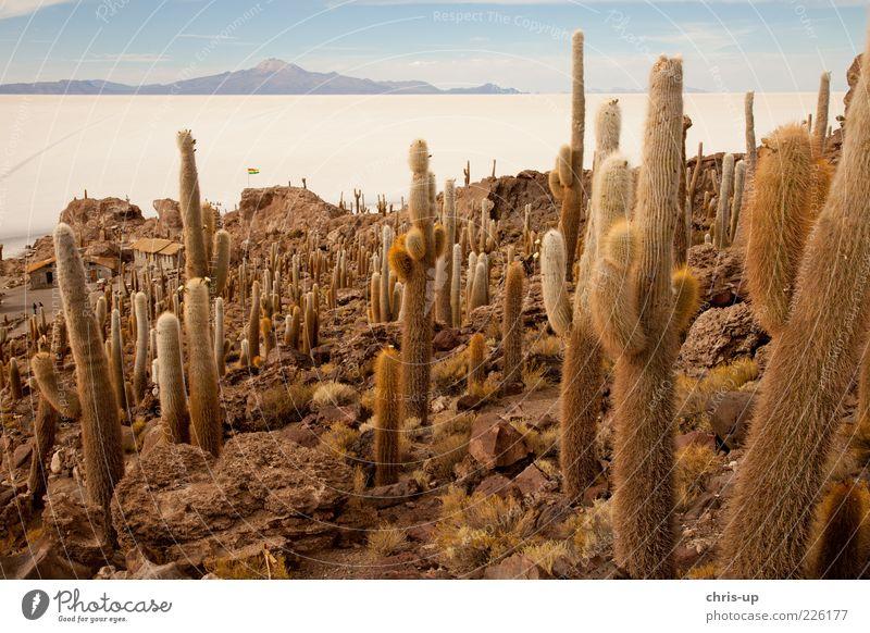 Kakteen und Salzsee Natur Pflanze Ferien & Urlaub & Reisen Einsamkeit Ferne Freiheit Berge u. Gebirge Umwelt Landschaft Insel Tourismus Wüste trocken Kaktus