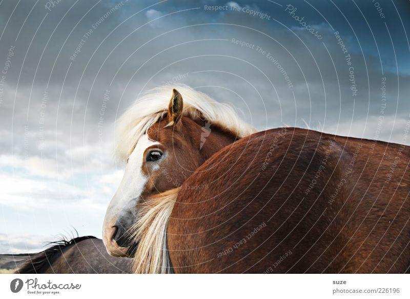 Dahintern Natur Landschaft Tier Himmel Wolken Wind Nutztier Wildtier Pferd Tiergesicht 3 Herde stehen warten ästhetisch Freundlichkeit natürlich niedlich wild