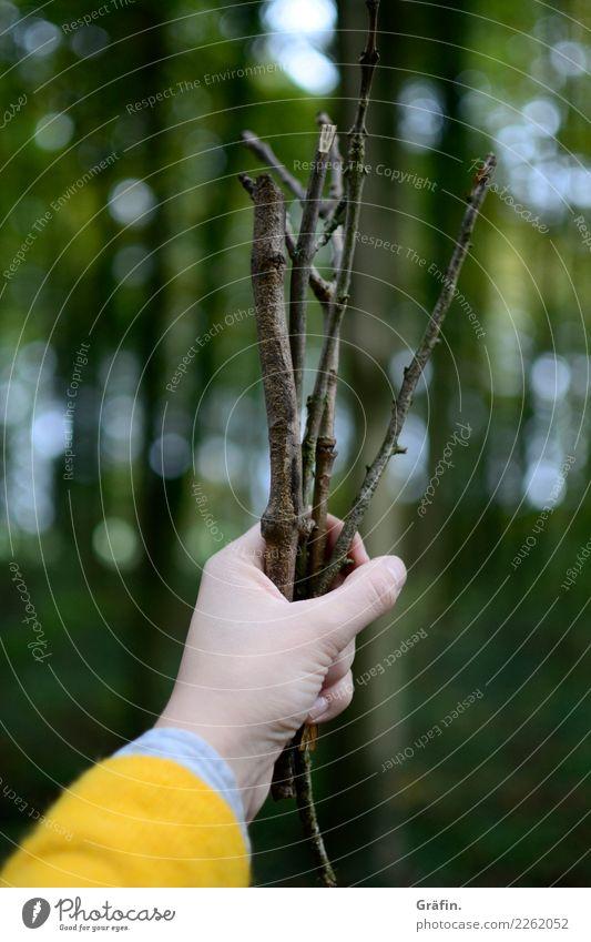Ich hab dir ein paar Stöckchen gepflückt Mensch Natur Jugendliche Junge Frau grün Landschaft Hand Baum Wald gelb Umwelt Herbst natürlich feminin Holz braun