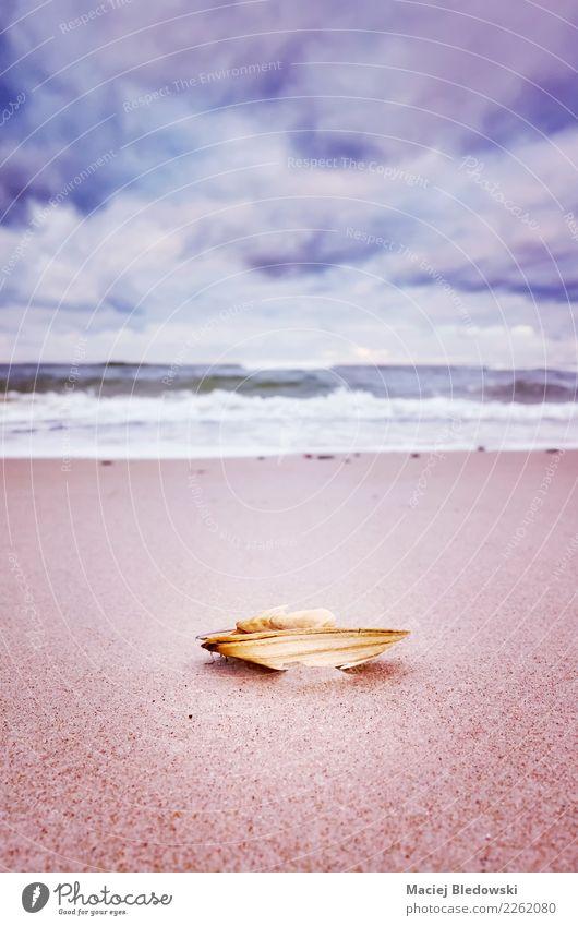 Gebrochene Muschel am Strand Himmel Natur Ferien & Urlaub & Reisen Sommer Meer Wolken Traurigkeit Gefühle Freiheit Sand Sommerurlaub Gelassenheit Tapete