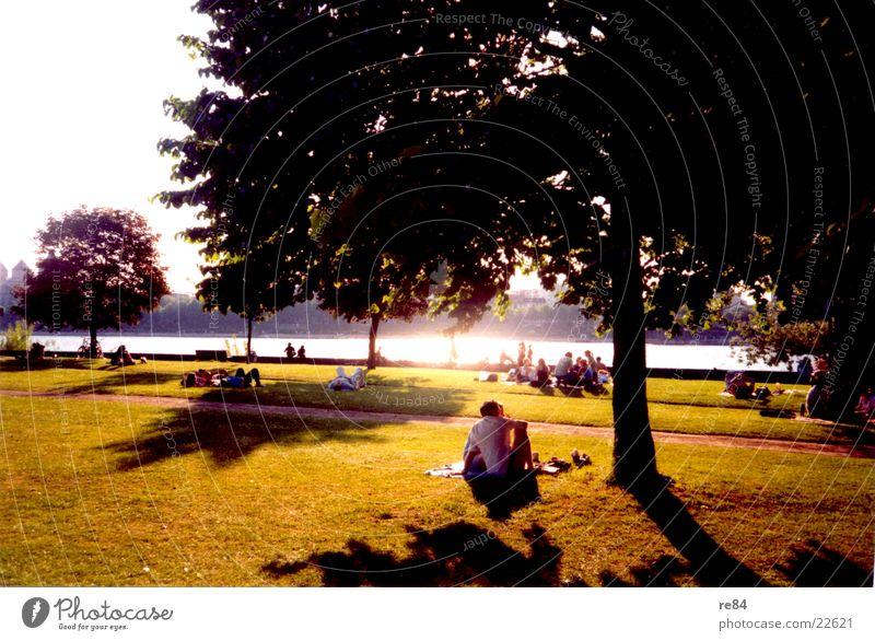 Rheinpark Köln - Ein Sonnentag weiß Baum grün schwarz Wiese Gras