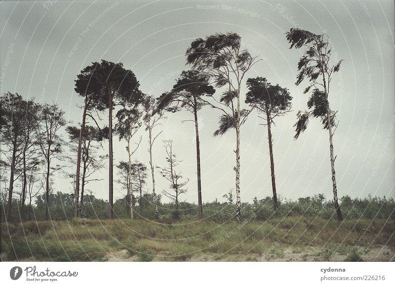 Abwechslungsreichtum Natur schön Baum Wolken ruhig Einsamkeit Wiese Umwelt Landschaft Gras Bewegung Luft Wind ästhetisch Stranddüne geheimnisvoll