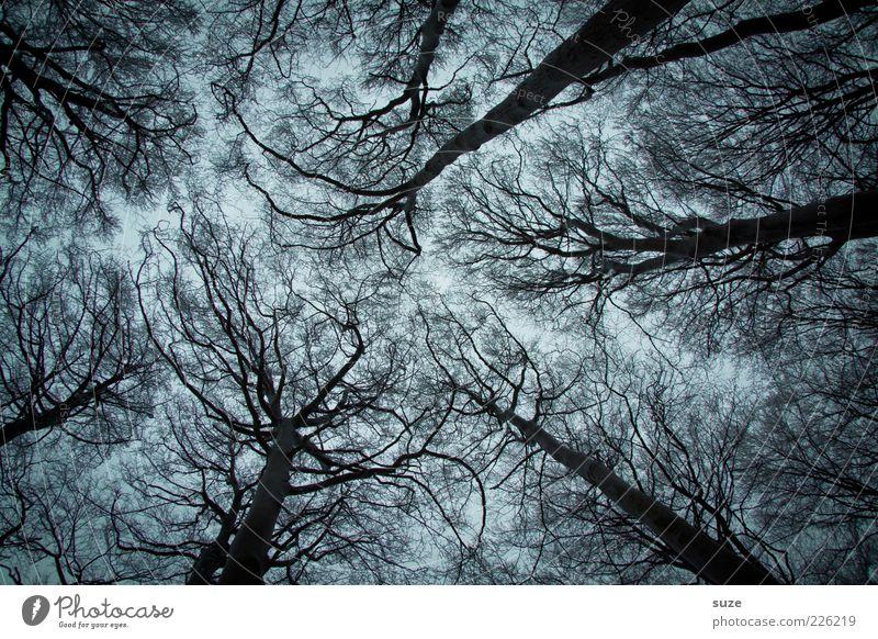 Höhenangst Natur Baum Einsamkeit Winter dunkel kalt Wald Umwelt Traurigkeit außergewöhnlich Kunst Angst wild groß Wachstum fantastisch