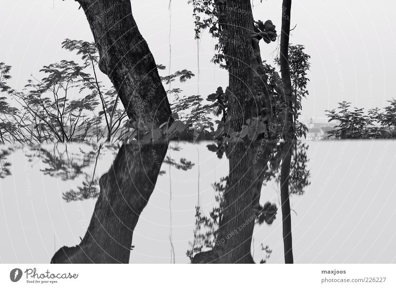 Singapore Trees Himmel Natur Wasser Baum Pflanze ruhig Garten Küste Insel Sträucher Asien Seeufer Baumstamm harmonisch Schwarzweißfoto