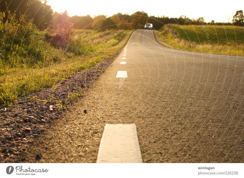 Eine Landstraße in Südschweden Natur Landschaft Pflanze Erde Sonne Sonnenlicht Herbst Schönes Wetter Baum Gras Verkehr Verkehrswege Güterverkehr & Logistik