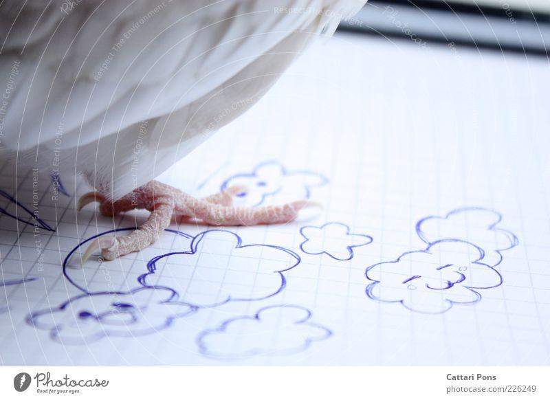 decision weiß Sonne Wolken Freiheit Vogel Tierfuß stehen Feder Papier Symbole & Metaphern ökologisch Biologische Landwirtschaft gemalt Krallen gefiedert