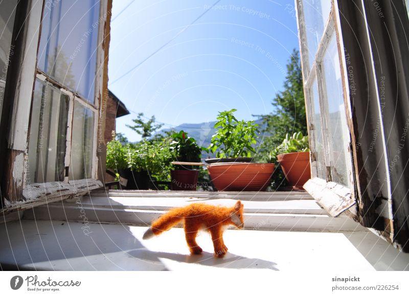 Fuchsbesuch Freude Wohnung Dekoration & Verzierung Topfpflanze Fenster 1 Tier Stofftiere Häusliches Leben authentisch klug Stimmung Farbfoto Innenaufnahme