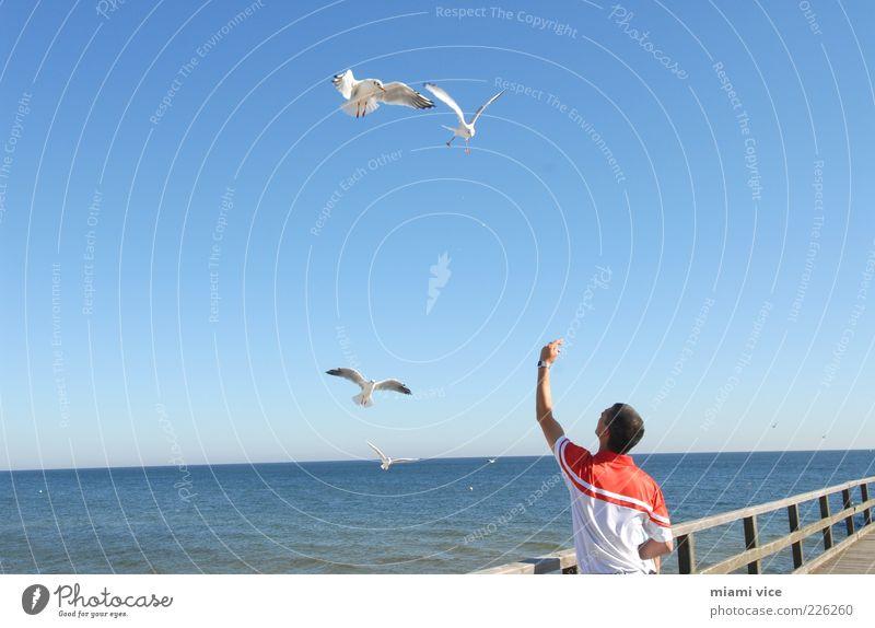 Usedom Birds Mensch Natur blau Freude Meer Ferne Tier Leben Spielen Freiheit Glück Horizont fliegen frisch Flügel Lebensfreude