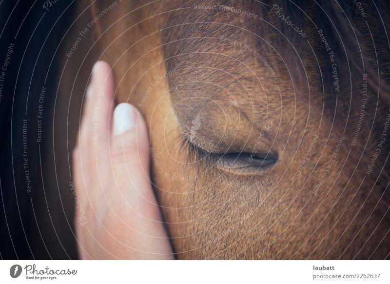 Zärtlichkeit Hand Tier Nutztier Wildtier Pferd Tiergesicht Fell Auge Wimpern 1 Partnerschaft Freude Freundschaft Frieden genießen Glaube Religion & Glaube