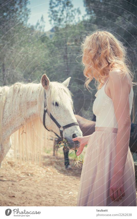 Frau, die ein weißes Pferd einzieht Wellness Leben Abenteuer Freiheit Sommerurlaub Landwirtschaft Forstwirtschaft Junge Frau Jugendliche Umwelt Natur Tier Erde