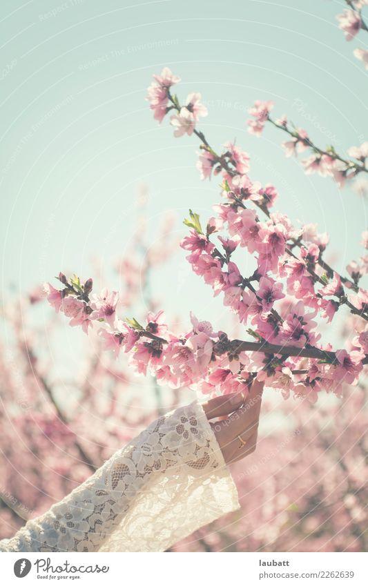 Blühend Wellness Leben Sinnesorgane Duft Valentinstag Hochzeit Junge Frau Jugendliche Hand Umwelt Natur Pflanze Luft Blume Blüte Pfirsichblüten Mandelblüte