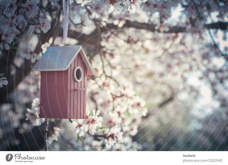 Sakura Vogelhäuser Lifestyle Wellness Wohlgefühl Erholung ruhig Meditation Kur Kirschblütenfest Umwelt Natur Luft Frühling Wetter Schönes Wetter Baum Blume