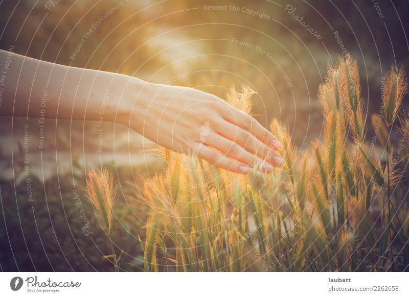 Erdverbindung Natur Pflanze Sommer Sonne Erholung Essen Umwelt Gesundheit Frühling Feld Luft frisch Schönes Wetter berühren Bioprodukte Frühstück