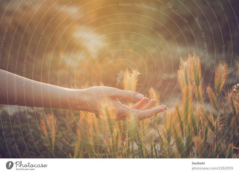 Alles über das Sommerlicht Frau Natur Hand Erholung ruhig Erwachsene Leben Gesundheit Gesundheitswesen Zufriedenheit Wachstum Wellness Wohlgefühl harmonisch