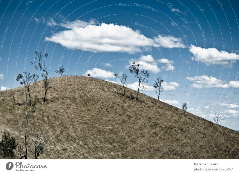 Daydreaming Umwelt Natur Landschaft Himmel Wolken Sonnenlicht Sommer Klima Wetter Schönes Wetter Pflanze Baum Sträucher Wiese Hügel Berge u. Gebirge hoch schön
