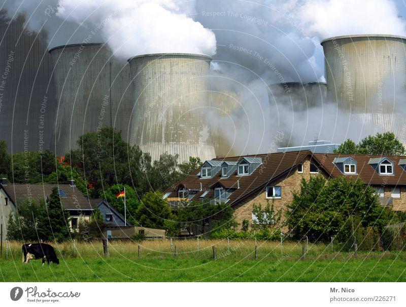 Deutschland Haus Garten Fabrik Industrie Energiewirtschaft Kohlekraftwerk Energiekrise Umwelt Klima Klimawandel Wiese Dorf Nutztier Kuh 1 Tier Rauch Fahne