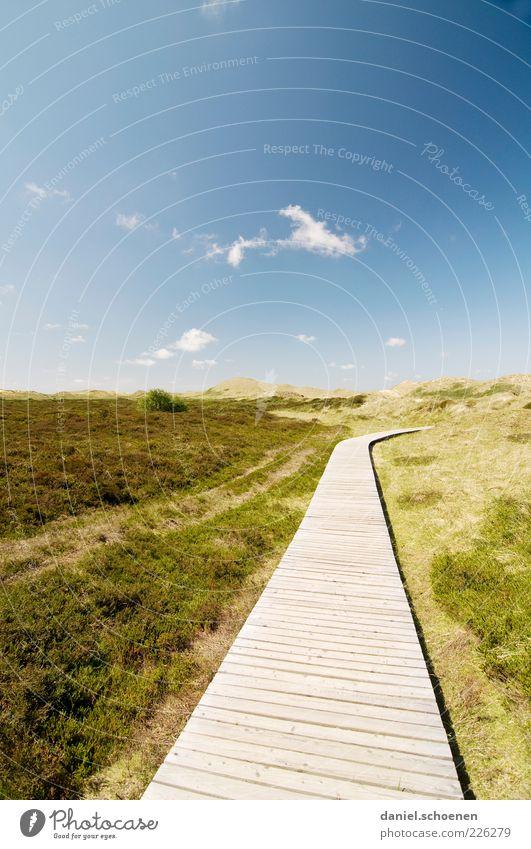 der Weg ( nix für nackte Füsse) Natur grün blau Sommer Ferien & Urlaub & Reisen Freiheit Landschaft Wege & Pfade Horizont Tourismus Klima Ziel Nordsee Schönes Wetter Meer Holzweg