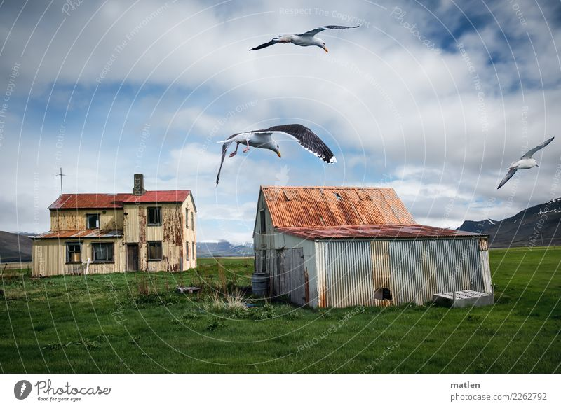 verlassen Himmel Pflanze Landschaft Haus Wolken Fenster Berge u. Gebirge Wand Frühling Gras Mauer Fassade fliegen gehen Tür Schönes Wetter