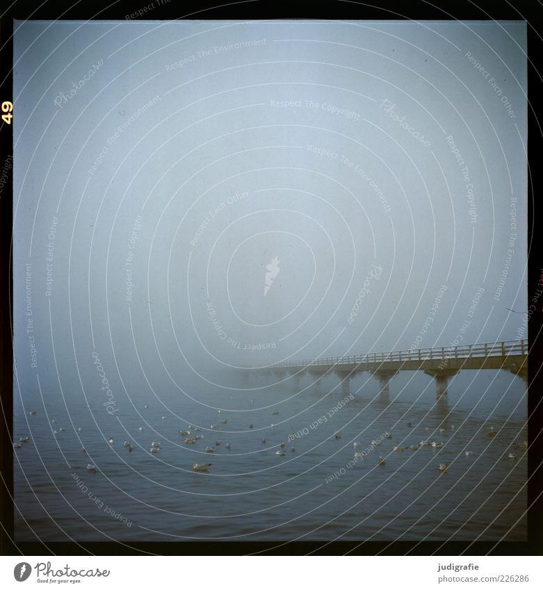 Küstennebel Umwelt Natur Tier Wasser Winter Klima Nebel Ostsee Vogel Möwe Tiergruppe dunkel kalt natürlich wild Stimmung Endzeitstimmung Seebrücke mystisch