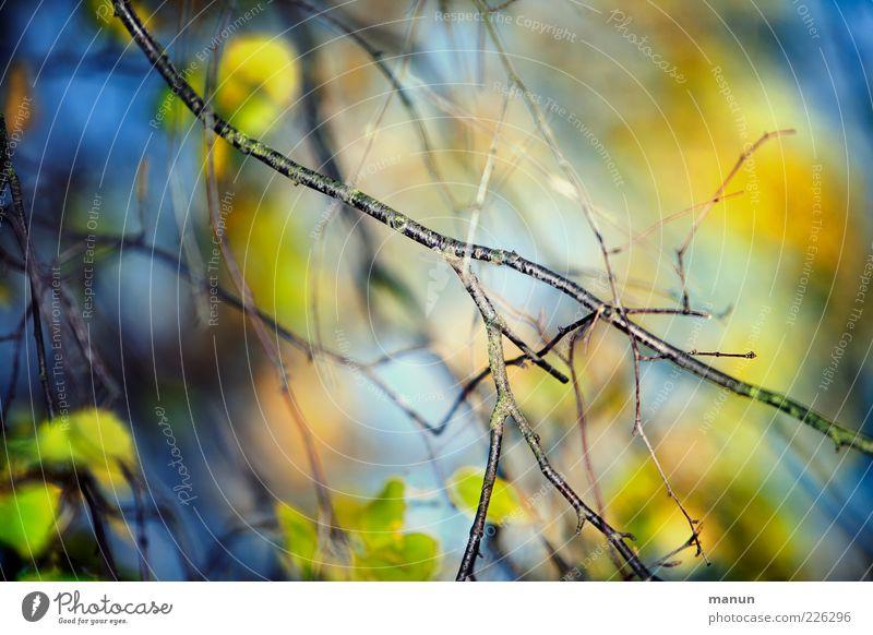 Bunt verästelt Natur schön blau Baum Sommer Blatt Herbst Wachstum natürlich Ast leuchten fantastisch herbstlich Laubbaum Zweige u. Äste