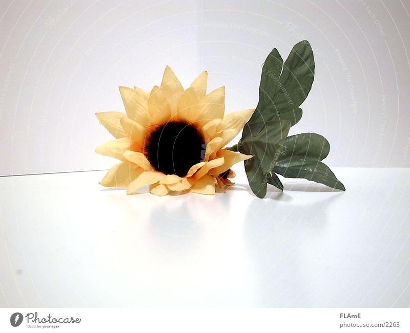 Sonnenblume Blume grün Pflanze gelb liegen Dekoration & Verzierung Häusliches Leben Stoff Kunststoff trocken Sonnenblume Symmetrie Originalität Textilien stagnierend Blütenblatt