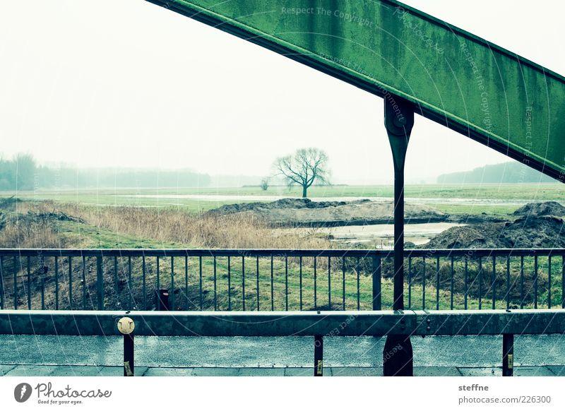 Überbrückung Umwelt Landschaft Herbst Winter schlechtes Wetter Nebel Regen Baum Brücke Farbfoto mehrfarbig Außenaufnahme Textfreiraum oben Tag Menschenleer