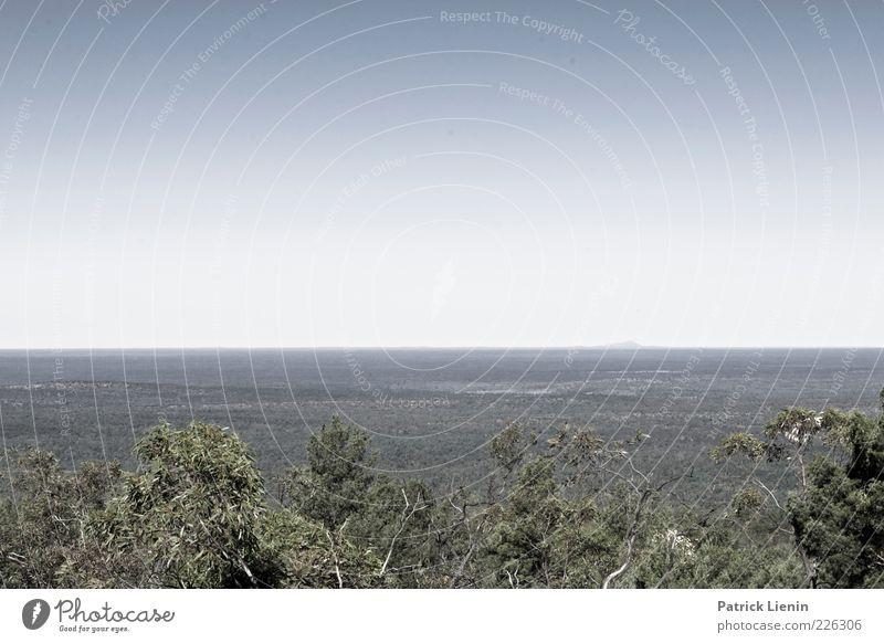 flat world Himmel Natur grün blau Baum Pflanze Sommer Einsamkeit Ferne Wald Umwelt Landschaft Stimmung Luft Wetter Klima