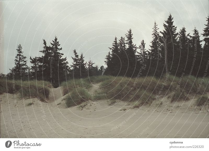 Sleepless Dreaming Natur schön Baum Strand Meer Wolken ruhig Einsamkeit Wald Leben Freiheit Umwelt Landschaft Sand Wege & Pfade Wind